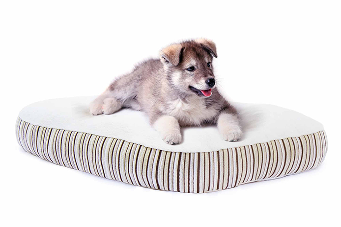 Pets Can Sleep Green Too: Essentia's Kingston Dog Bed Thumbnail