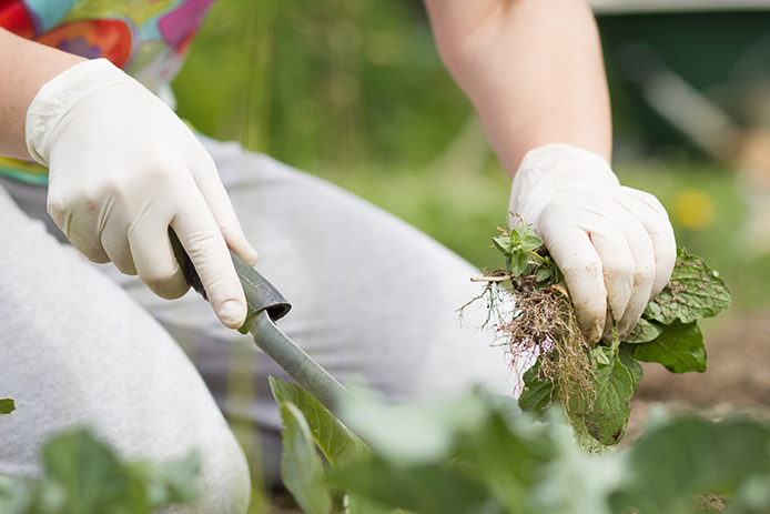 Why You Need Weed Control Services Thumbnail